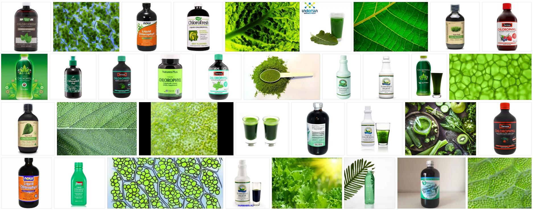 What is Chlorophyll